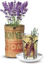 Biologische theekruiden kweken - lavendel