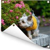 Een Yorkshire Terrier loopt langs kleurrijke bloemen Tuinposter 50x50 cm - klein - Tuindoek / Buitencanvas / Schilderijen voor buiten (tuin decoratie)