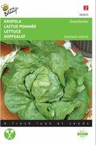 Kropsla Gaardenier -  Lactuca sativa - set van 7 stuks
