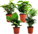 Plant in a Box - Budget mix van 4 luchtzuiverende kamerplanten - Pot ⌀12cm - Hoogte ↕ 25-40cm