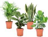Plant in a Box - Oersterke kamerplanten mix - Set van 4 stuks - Pot ⌀12cm - Hoogte ↕ 25-40cm - Groen