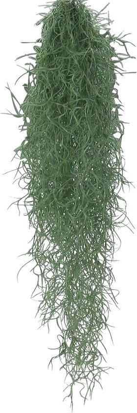 Tillandsia Usneoides - Tropische hangplant - ↑50-60 cm
