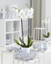 Witte orchidee - White World