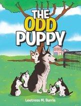 The Odd Puppy