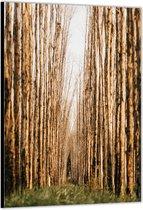 Dibond –Pad tussen Takken– 30x40cm Foto op Aluminium (Wanddecoratie van metaal)