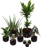 Set van 9 planten met bijpassende zwarte plantenpotten – kamerplanten voor binnen met verschillende groottes - Kodi