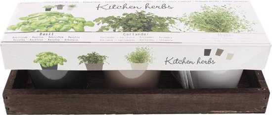 keukenkruiden/tuinkruiden potten setje - basilicum - koriander- tijm - metalen potjes - kruiden