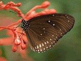 MyHobby Borduurpakket – Bruine vlinder 40×30 cm - Aida stof 5,5 kruisjes/cm (14 count)