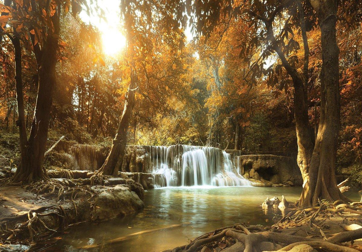 Fotobehang Vlies   Bos, Waterval   Bruin   368x254cm (bxh)