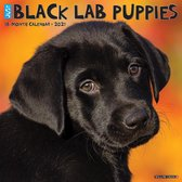 Just Black Lab Puppies 2021 Calendar