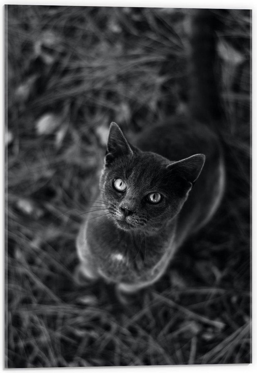 Plexiglas - Kat in het zwart/wit  - 40x60cm Foto op Plexiglas (Wanddecoratie op Plexiglas)