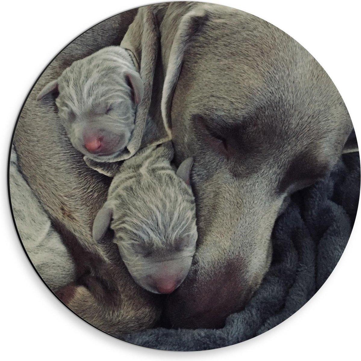 Dibond Wandcirkel - Grijze Hond met Puppy's - 30x30cm Foto op Aluminium Wandcirkel (met ophangsysteem)