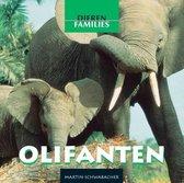 Dierenfamilies  -   Olifanten