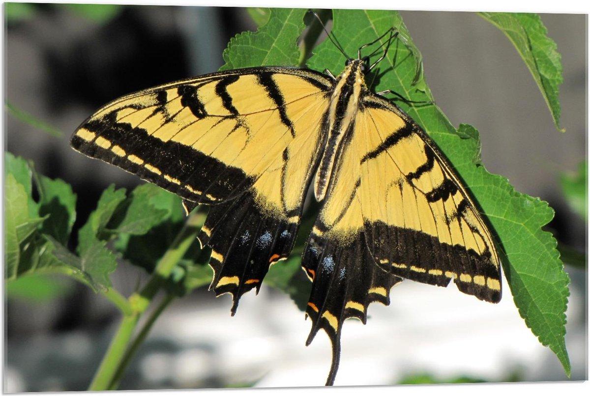 Plexiglas - Gele met Zwarte Vlinder op Groen Blaadje - 90x60cm Foto op Plexiglas (Wanddecoratie op Plexiglas)