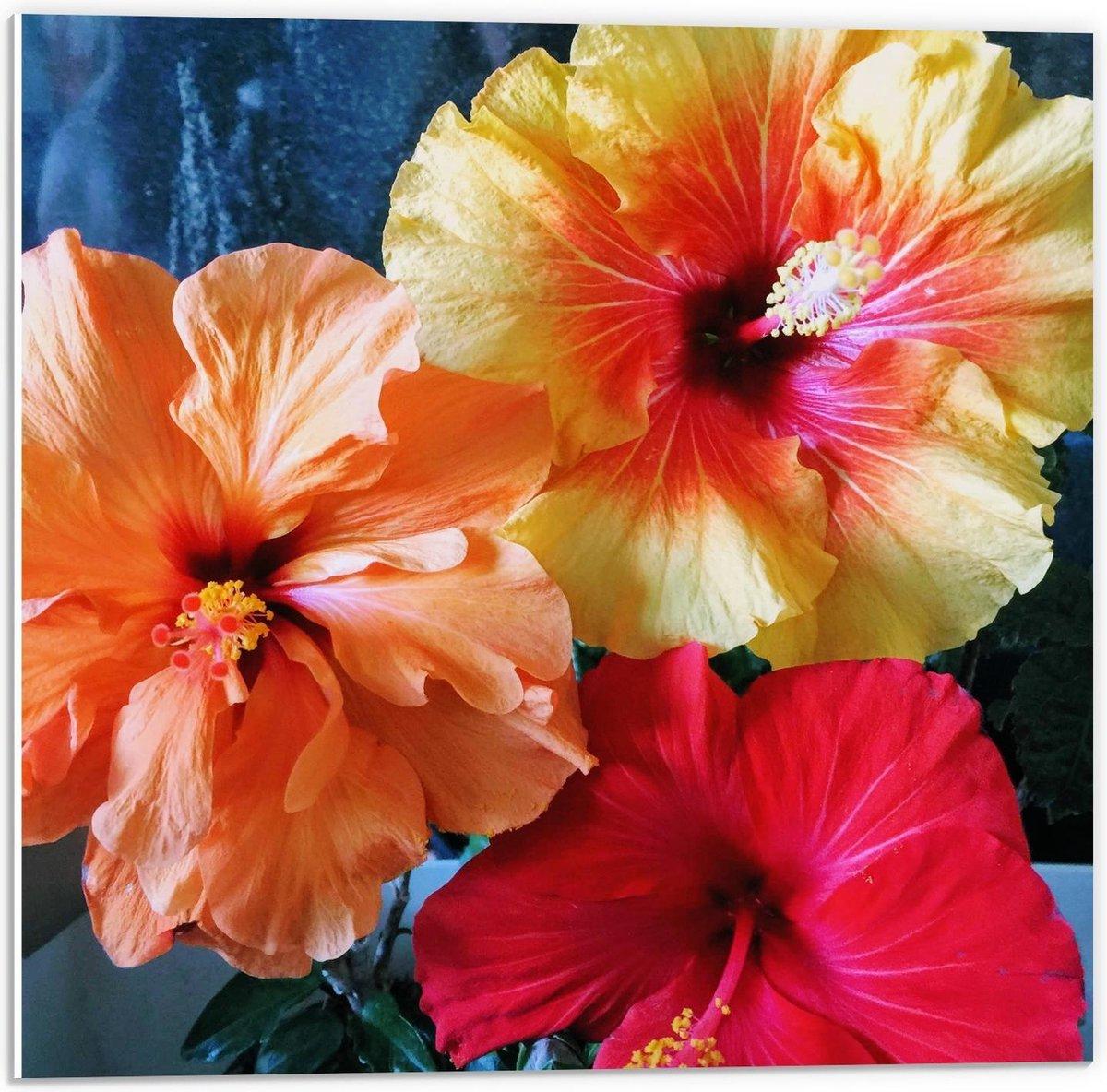 Forex - Gekleurde Bloementjes  - 50x50cm Foto op Forex