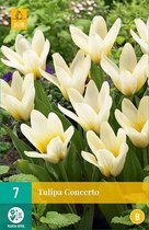 X 7 Tulipa Concerto