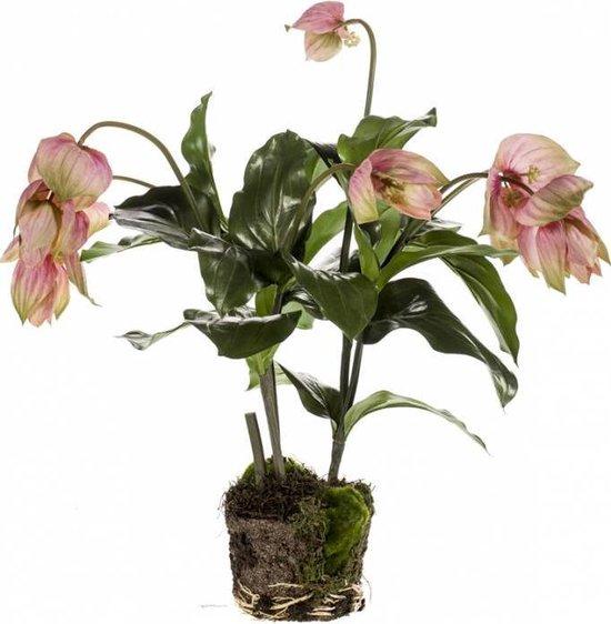 Kunstplant Medinilla 60 cm