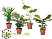 Plant in a Box - Tropische kamerplanten mix - Set van 4 stuks - Pot ⌀12cm - Hoogte ↕ 25-40cm