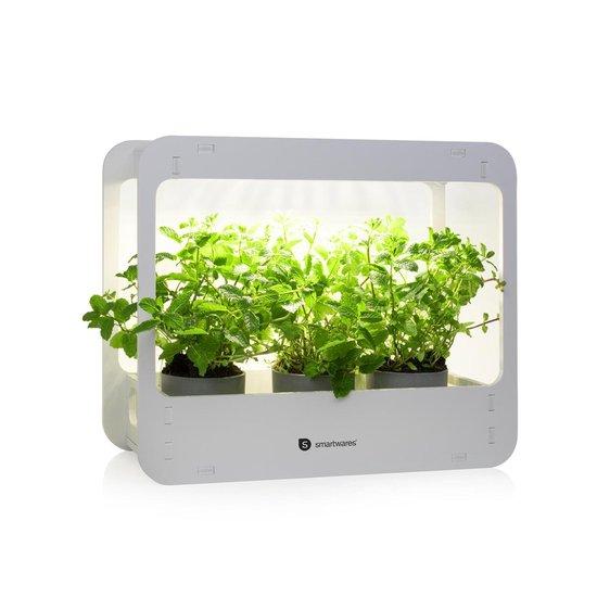 Binnentuin/kas met groeilamp