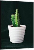 Dibond –Cactus – 60x90cm Foto op Dibond;Aluminium (Wanddecoratie van metaal)