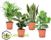 Plant in a Box - Oersterke kamerplanten mix - Set van 4 stuks - Pot ⌀12cm - Hoogte ↕ 25-40cm