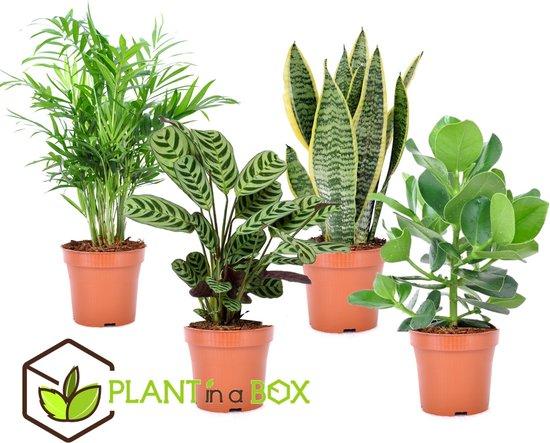 PLANT IN A BOX Oersterke kamerplanten mix - Set van 4 stuks - pot ⌀12 cm - Hoogte ↕ 25 - 40 cm