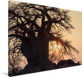 Grote baobabboom bij zonsondergang in het Nationaal park Makgadikgadi Pans Canvas 140x90 cm - Foto print op Canvas schilderij (Wanddecoratie woonkamer / slaapkamer)