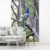 Groene pauw zit op een dikke tak in het bos fotobehang vinyl 180x270 cm - Foto print op behang