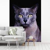 Fotobehang vinyl - Grijs-blauwe Burmees kat op een zwarte achtergrond breedte 250 cm x hoogte 340 cm - Foto print op behang (in 7 formaten beschikbaar)