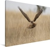 Grauwe kiekendief met gespreide vleugels Canvas 90x60 cm - Foto print op Canvas schilderij (Wanddecoratie woonkamer / slaapkamer)