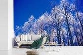 Besneeuwde bomen in het Nationaal park Santa Fe in Panama fotobehang vinyl 540x360 cm - Foto print op behang