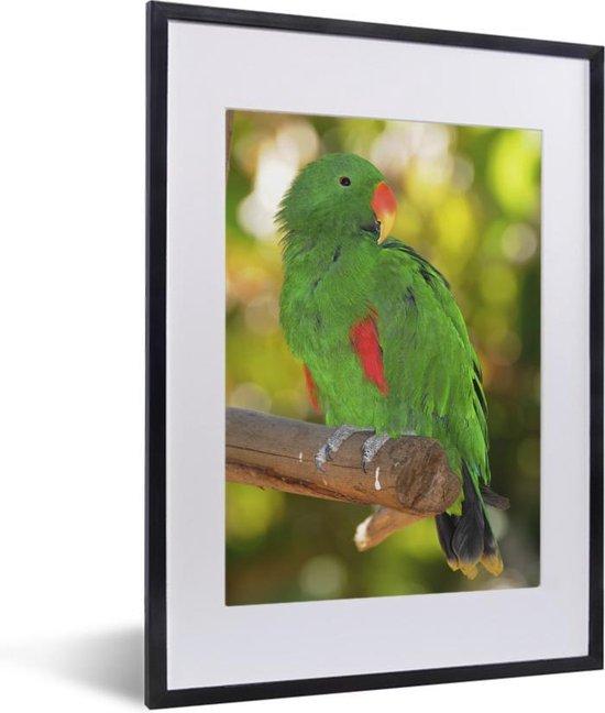 Foto in lijst - Kleurrijke edelpapegaai zit op een takje fotolijst zwart met witte passe-partout klein 30x40 cm - Poster in lijst (Wanddecoratie woonkamer / slaapkamer)