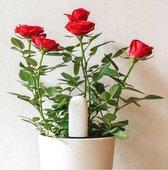 Xiaomi HHCC - Flower Care Smart plant sensor   houdt de welzijn van de planten goed in de gaten!!