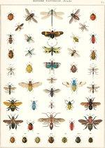 Poster Insecten - Cavallini & Co - Vintage Schoolplaat Natural History Insects