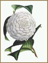 Notebook Camellia