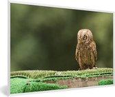 Foto in lijst - Dwergooruil op een boomtak fotolijst wit 60x40 cm - Poster in lijst (Wanddecoratie woonkamer / slaapkamer)