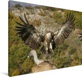 Vale gier met gespreide vleugels Canvas 90x60 cm - Foto print op Canvas schilderij (Wanddecoratie woonkamer / slaapkamer)