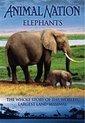 Elephants - Animal Nation