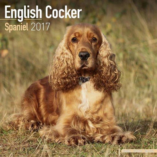 Engelse Cocker Spaniel Kalender - 2017 - Avonside Publishing Ltd