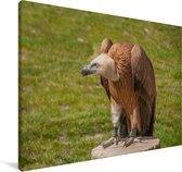 Vale gier op een boomstronk Canvas 140x90 cm - Foto print op Canvas schilderij (Wanddecoratie woonkamer / slaapkamer)