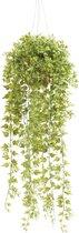 Emerald - Ivy Hangplant - In pot - 50 cm - Groen