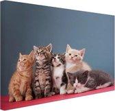 Portret van groep kittens Canvas 60x40 cm - Foto print op Canvas schilderij (Wanddecoratie woonkamer / slaapkamer) / Dieren Canvas Schilderijen