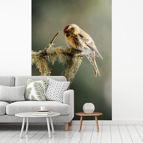 Fotobehang vinyl - De barmsijs zit op een takje met mos breedte 215 cm x hoogte 320 cm - Foto print op behang (in 7 formaten beschikbaar)