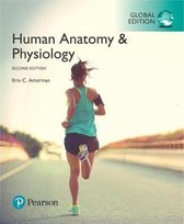 Amerman: HumanAnatomy&Phy GE_p2