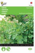 Kervel Fijne Krul - Anthriscus cereflolium - set van 8 stuks