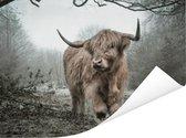 Schotse hooglander in de herfst Poster 40x30 cm - klein - Foto print op Poster (wanddecoratie woonkamer / slaapkamer) / Wilde dieren Poster