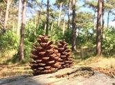Natuurlijke Dennenappels - Herfst en Kerstdecoratie - 4 tot 7 cm hoog - > 100 stuks