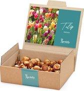 Tulpen Bollen Mix (34x Bloembollen | Gardelly)