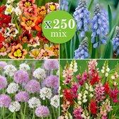 250x Bloembollen mix 'Bulbs' - Set van 250 - Sparaxis + Allium + Muscarai + Ixia - Gemengde kleuren - Vroegbloeiers