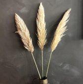 Pampas pluimen vers | Pampas gras naturel | Pampasgras | 3 stuks 100 cm
